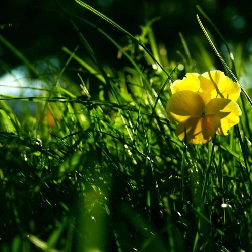 Yellow flower on the grass wallpaper