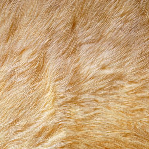Yellow fur