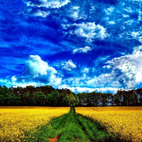 Yellow meadow under fantasy blue sky wallpaper